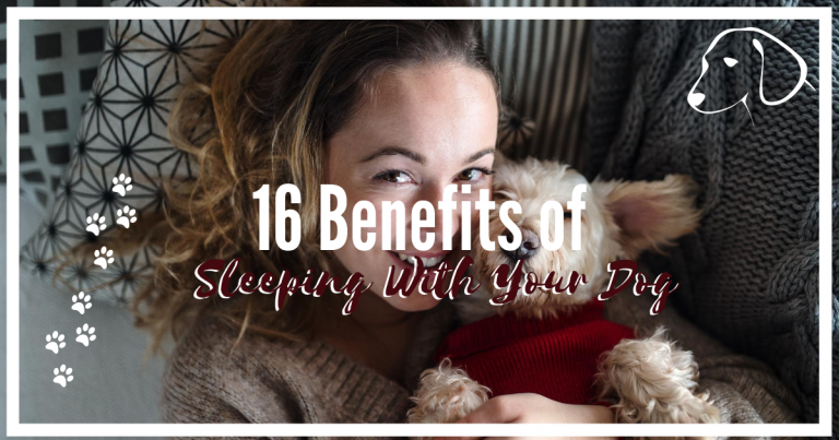 16 Benefits Of Sleeping With Your Dog
